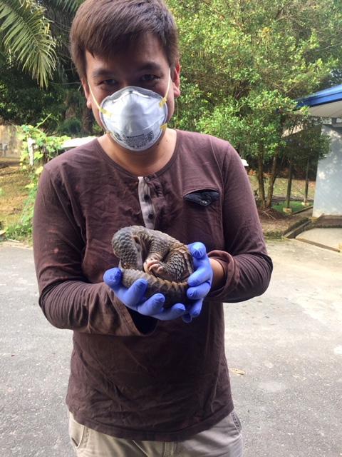 Saving pangolins from extinction